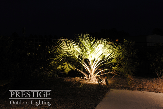 Make Those Palms Pop With Some Basic Accent Lighting Landscape Lighting Holiday Lights Outdoor Outdoor Lighting