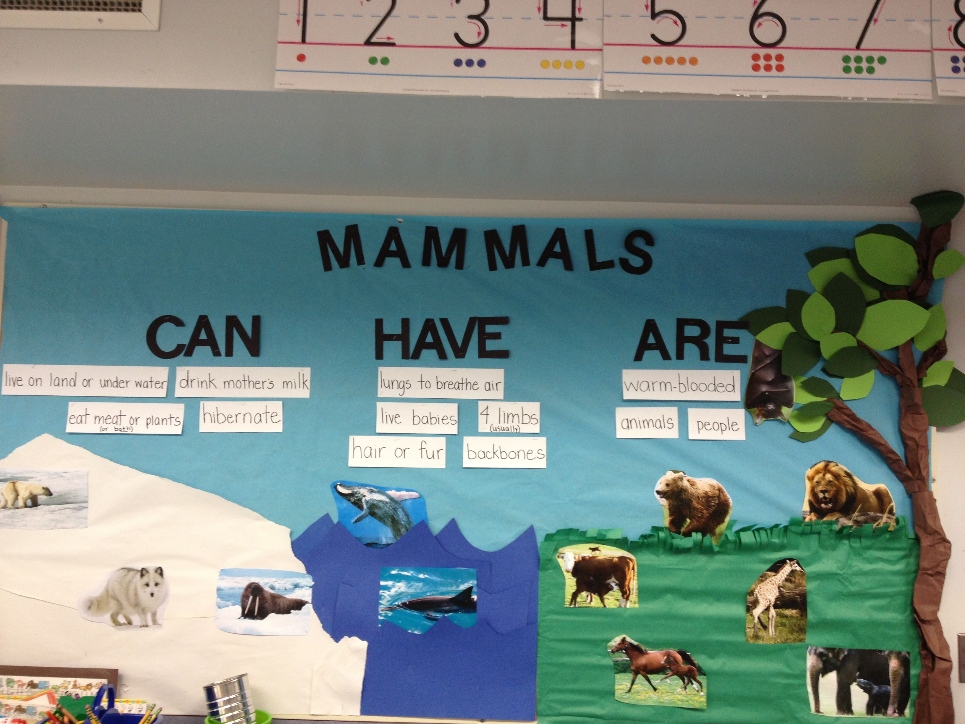 Mammals Bulletin Board