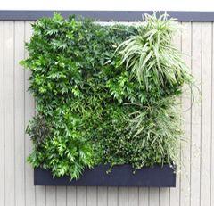 Captivating Green Living Walls: Retail And DIY Products   Green Walls U0026 Green Roofs    Plant