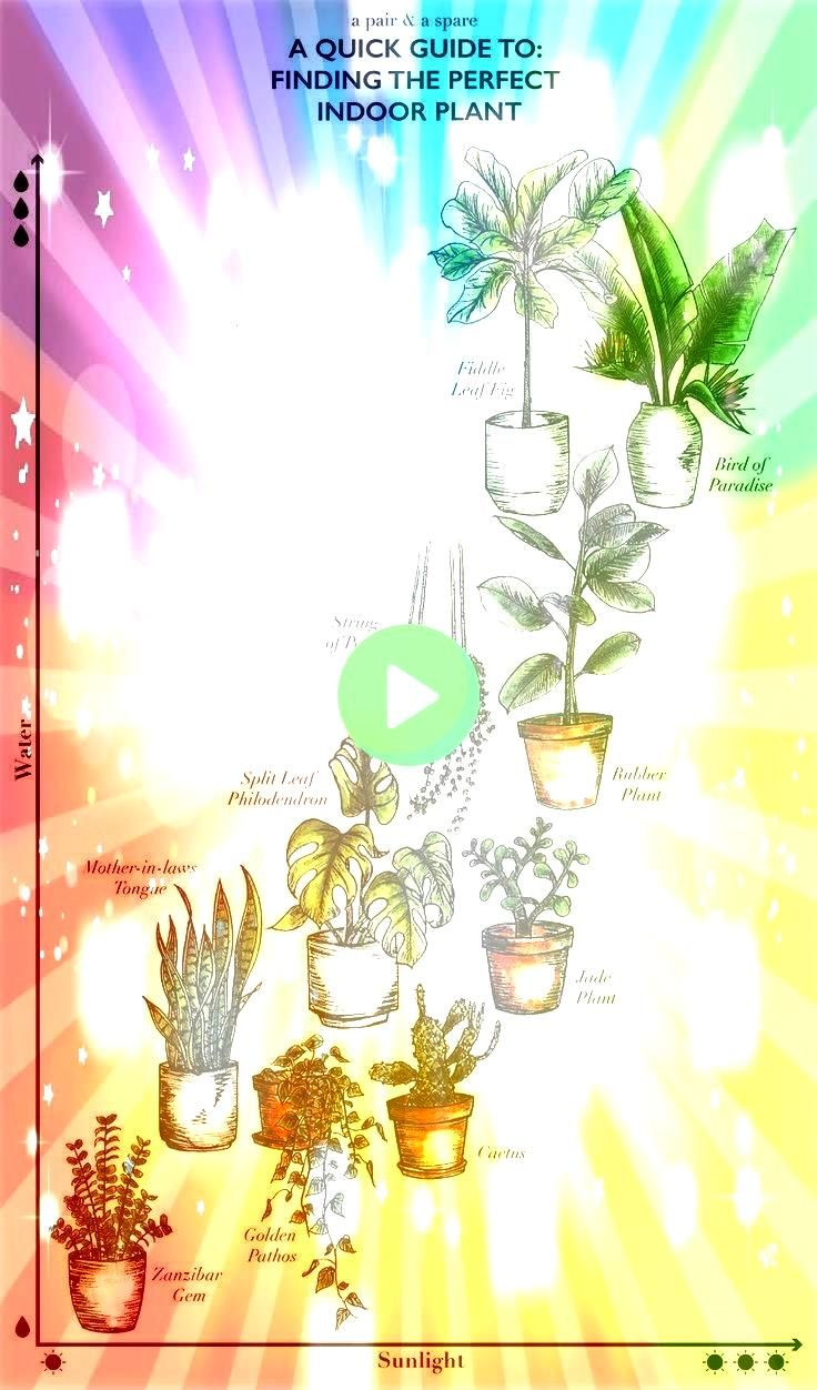 Help you Choose the Right Indoor Plants so They Actually Live 5 Questions to Help you Choose the Right Indoor Plants so They Actually Live5 Questions to Help you Choose t...