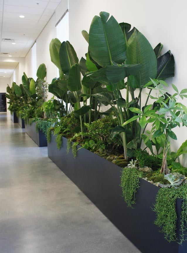 Mixed Indoor Plants In Large Planters In An Office Interior Design Plants Plant Office Design Office Plants