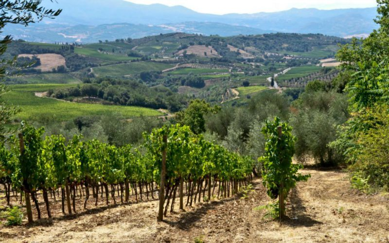 Wine Tour in Tuscany - wine tasting tours in Florence ...