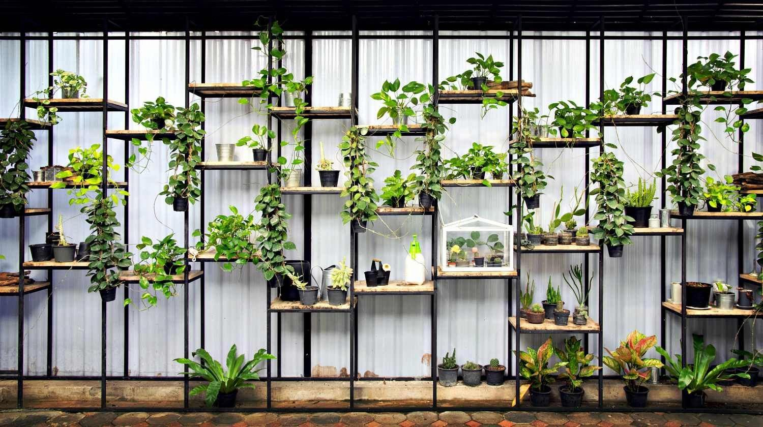 Feature | Shelf and box of tree plants decoration on wall | DIY Indoor Vertical Herb Garden #senkrechtangelegtekräutergärten Feature | Shelf and box of tree plants decoration on wall | DIY Indoor Vertical Herb Garden #senkrechtangelegtekräutergärten