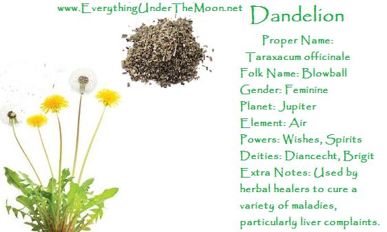 Dandelion Witch Herbs Witchcraft Love Spells Magick Spells