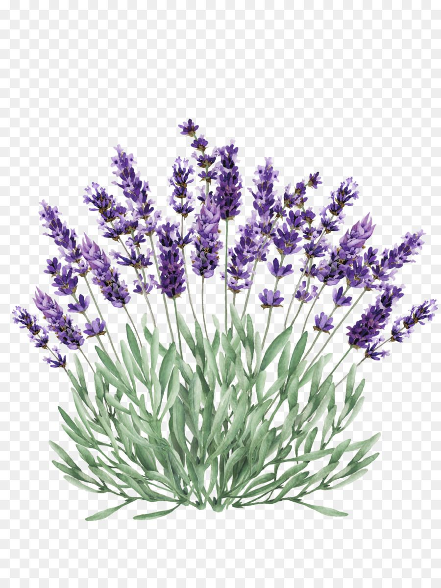 Purple Watercolor Flower Png Download 1928 2550 Free Transparent Lavender Png Download Watercolor Flowers Purple Watercolor Watercolor Illustration
