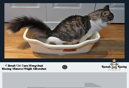 Assalammualaikum Wr Wb Selamat Pagi Semua Para Pecinta Kucing Sedunia Saya Pengasuh Kucing Di Website Rumahkucing Co Id Di 2020 Kucing Pengasuh Kesehatan Pencernaan