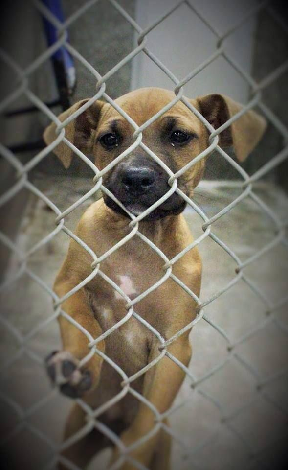 06/22/14Boxer lovers!!!! Look at this precious Boxer mix