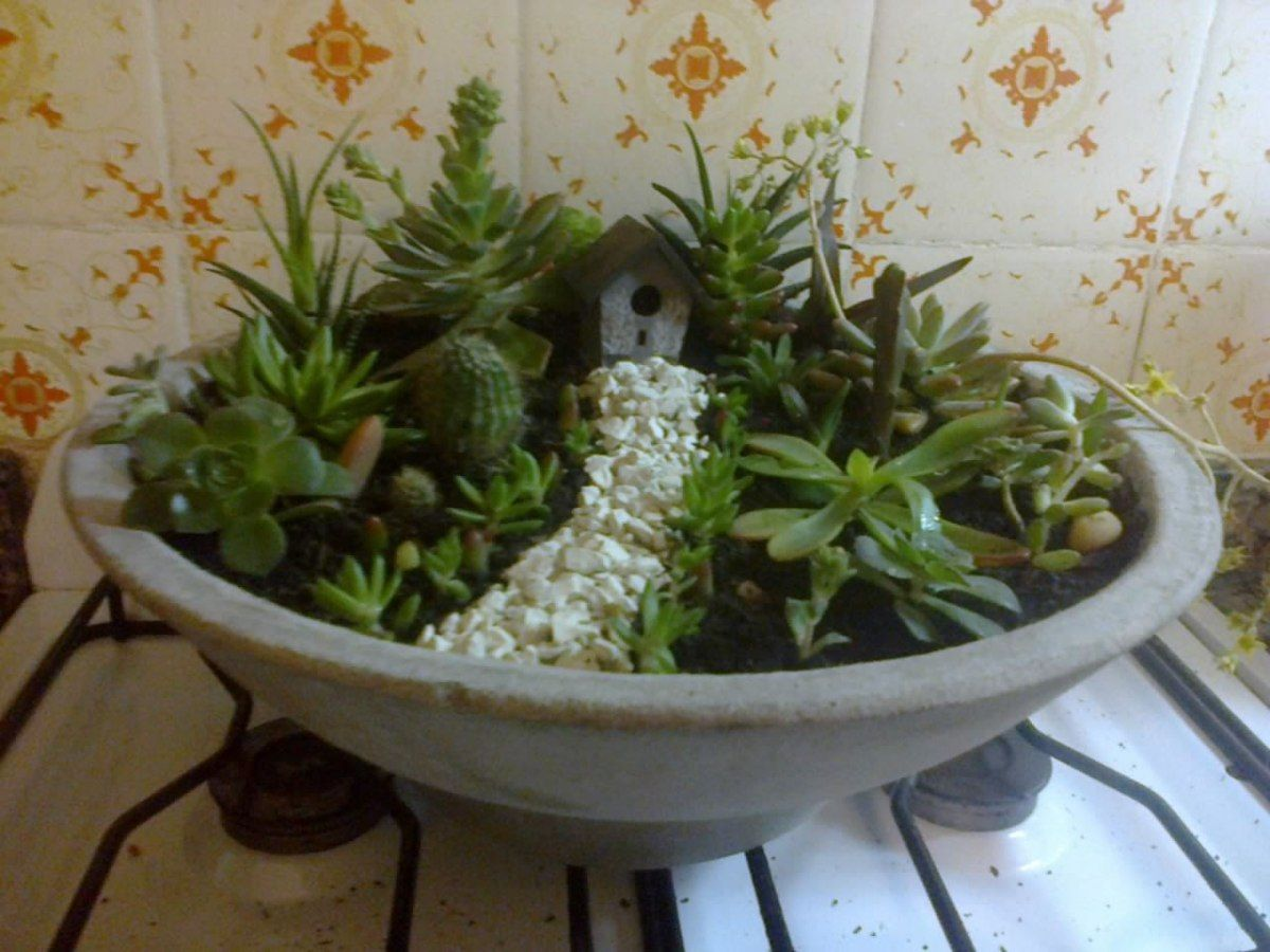 Resultado De Imagen De Como Decorar Macetas Con Cactus Plantas  ~ Macetas Originales Para El Jardin