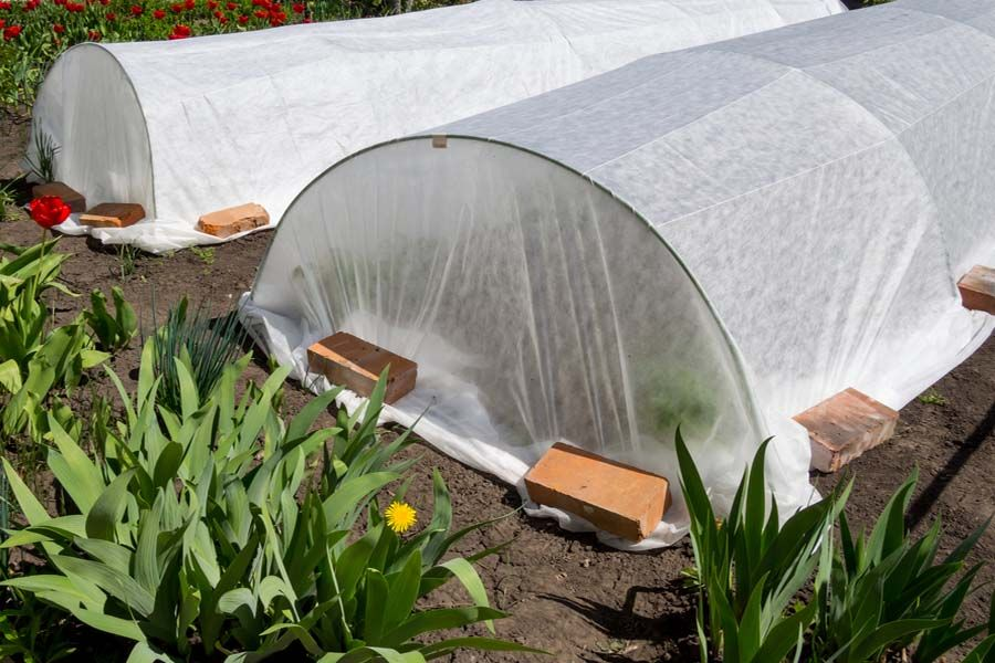 Using Row Covers To Protect The Garden From Pests And ...