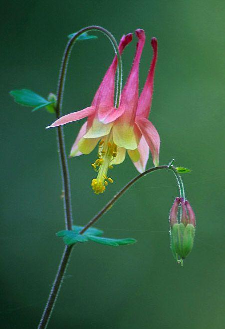 Pin On Floralshots