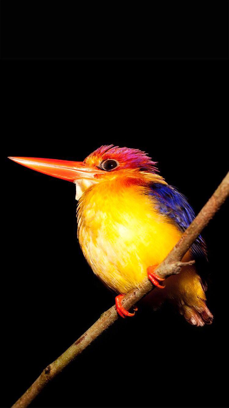 Bright Bird On The Black Background Bird Wallpaper Wallpaper Bird