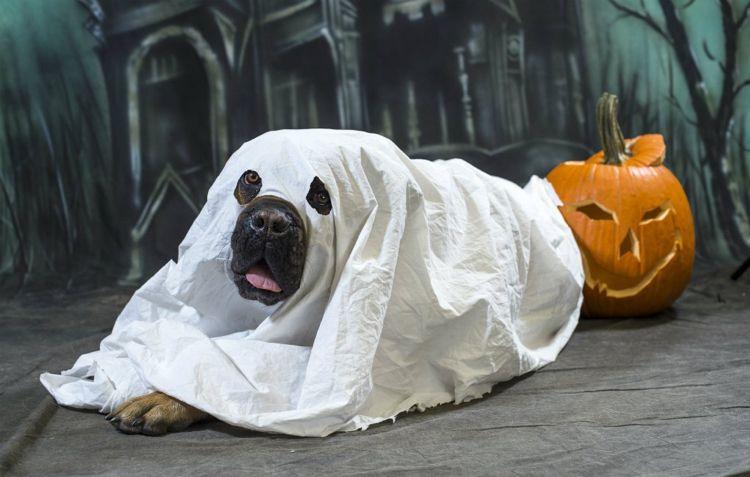 Quatang Gallery - Deguisements Halloween Pour Animaux 2tout2rien Animaux En Costumes Deguisement Halloween Chat Crochet