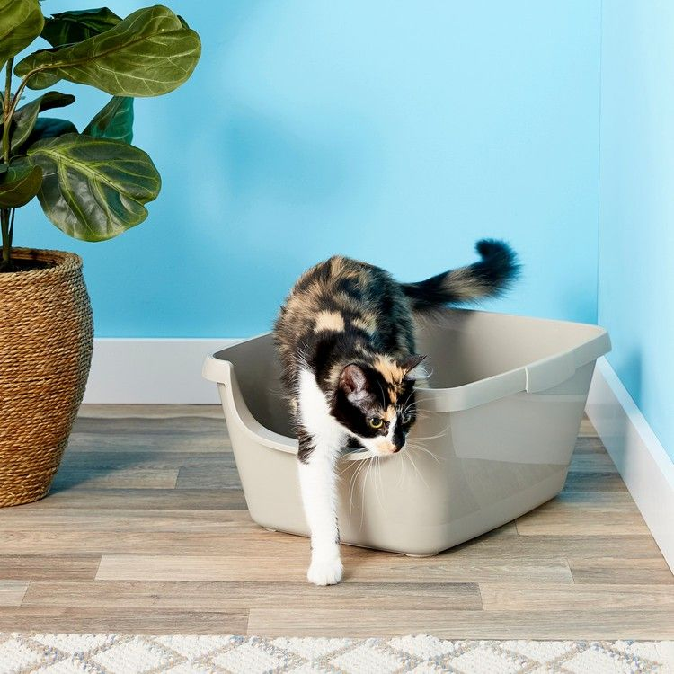The Best Litter Boxes According To Vets And Rescuers New York Magazine Best Cat Litter Best Litter Box Natural Cat Litter