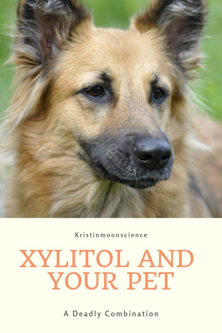 Xylitol And Your Pet A Deadly Combination Can Dogs Eat Pets
