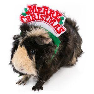 All Living Things Petholiday Merry Christmas Headband Small