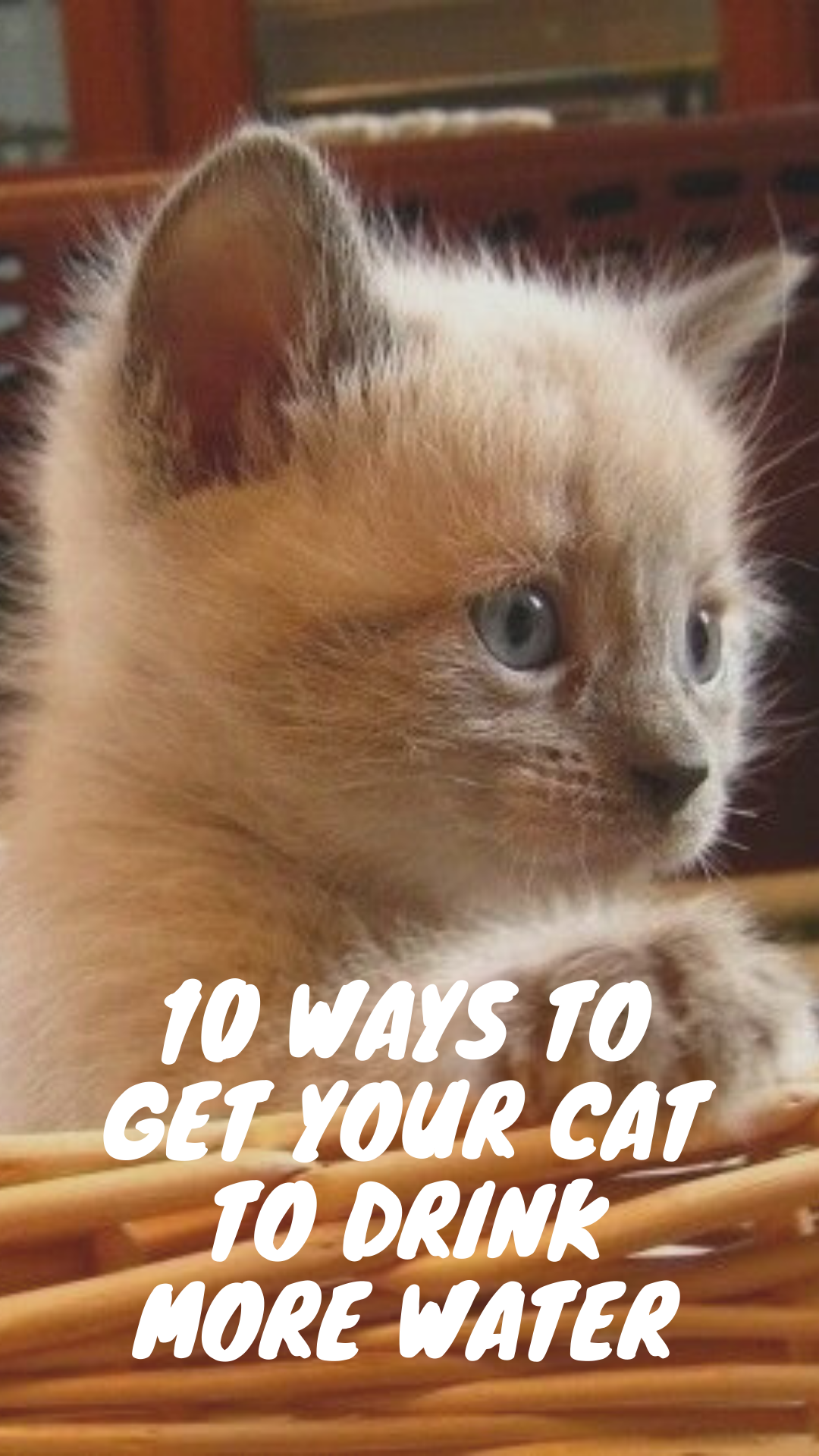 10 Ways to Get Your Cat to Drink More Water Cats, Pretty