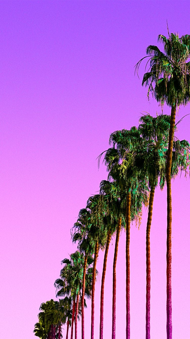 Purple palms iPhone wallpaper  BG☆  Pinterest  Palm, Wallpaper and Phone