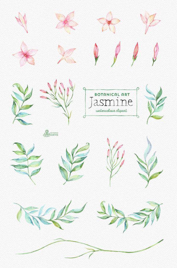 Jasmine Botanical Art Floral Elements Wreath Branch Watercolor