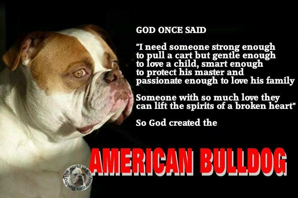 American Bulldog Bulldog Quotes American Bull