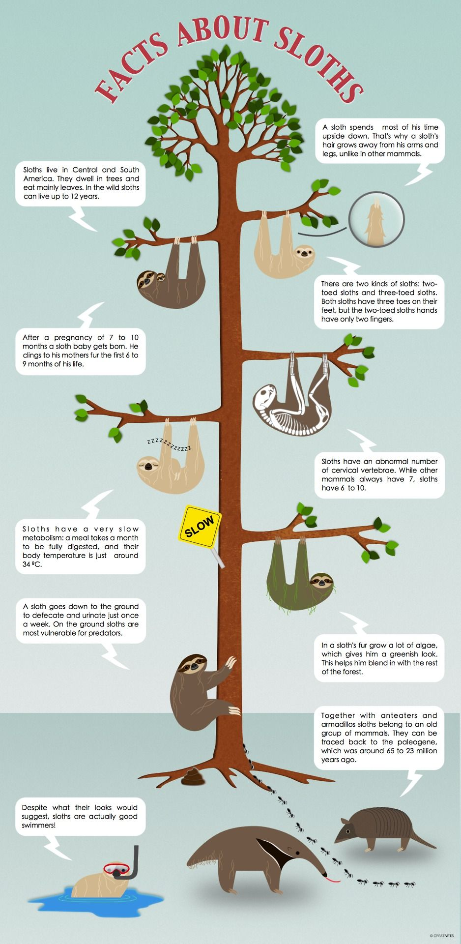 Facts About Sloths | All things, Pajamas and Facts