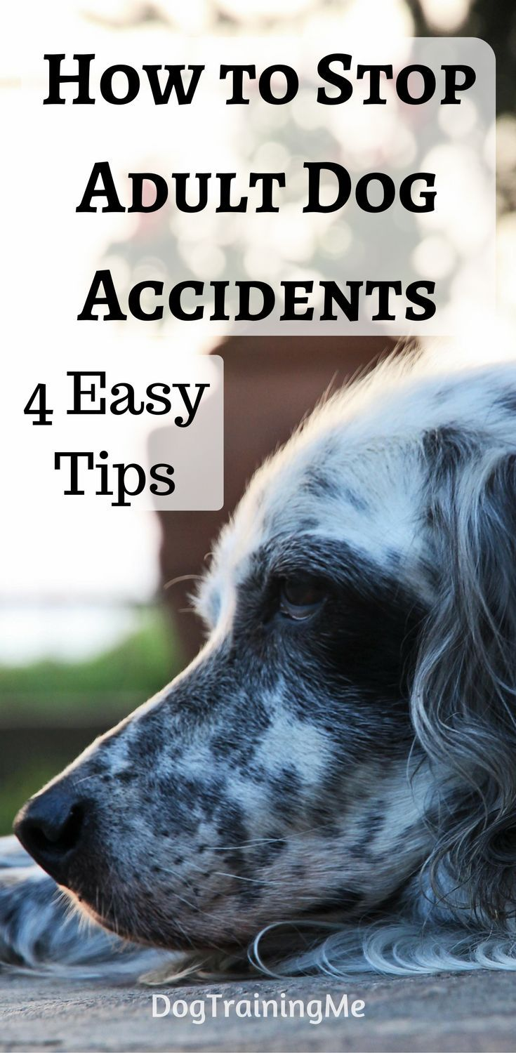 Dog Training Tips: Preventing Accidents in the House