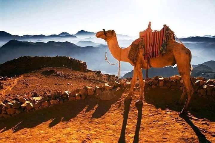 Sinai...