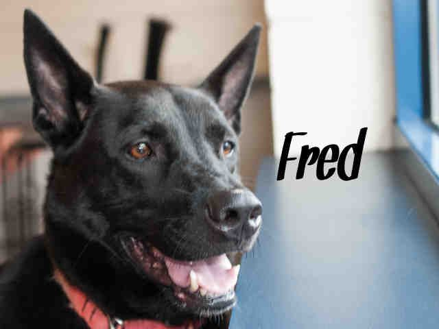 Fred Pittsburgh Pa Petharbor Com Animal Shelter Adopt A Pet Dogs Cats Puppies Kittens Humane Society Spca Los Animal Shelter Animals Humane Society