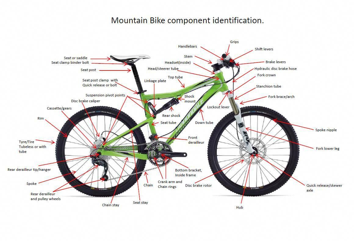 Infographic Of Main Bike Parts With The Names Vector Image On