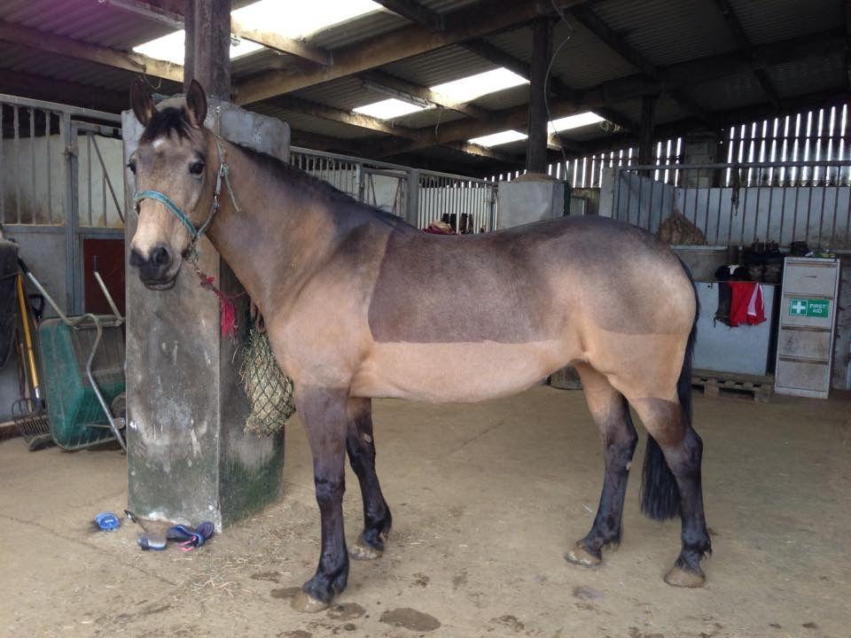 Dun horse blanket clip horses dun horse horse blankets