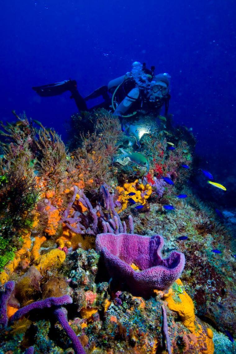 buzo nadando en Cozumel