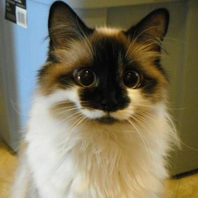 Pin By Vic Ellis Gormley On Kitten Pretty Cats Kittens Cutest