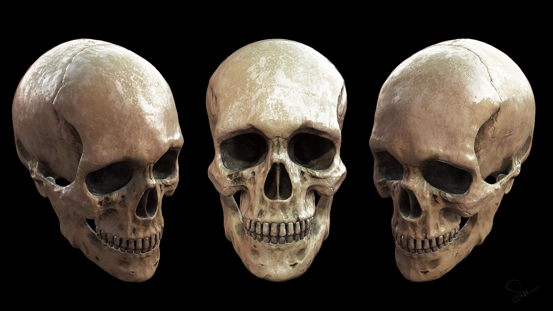 Human Skull Real Human Skull References For Artists Google Search