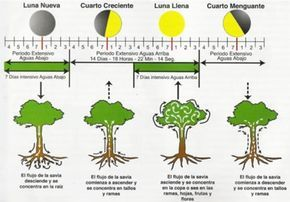 Las Fases Lunares Y Su Efecto En Las Plantas Y Seres Vivos Calendario Lunar Para Sembrar Agricultura Ecológica Agricultura