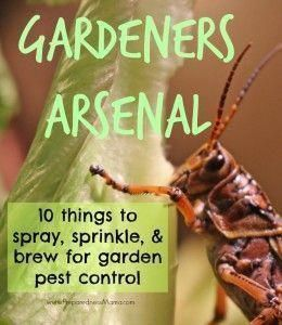 The Gardener's Arsenal  10 Things to Spray, Sprinkle & Brew for Garden Pest Control – Organic pest control