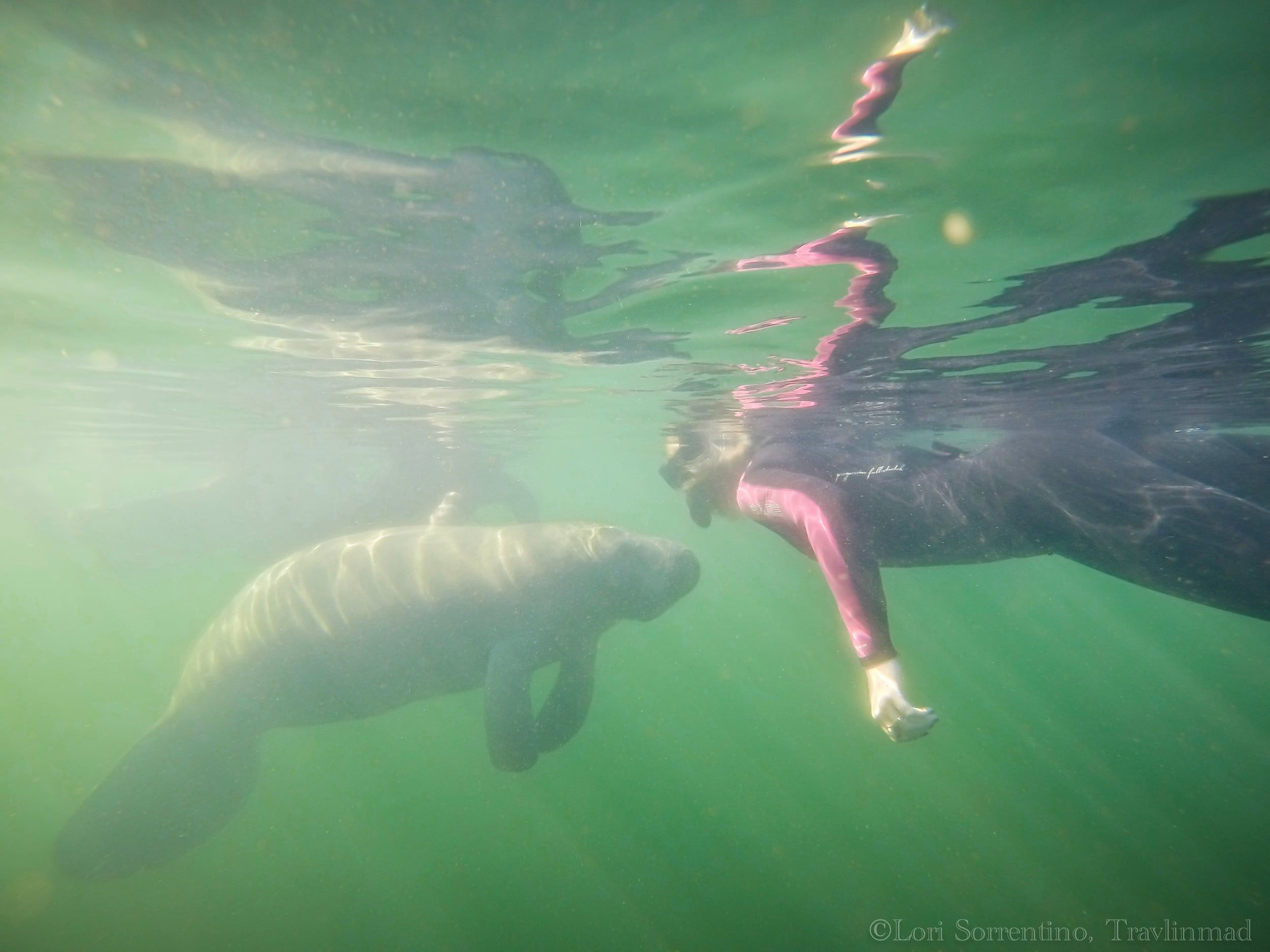 The Best Florida Manatee Tours to Swim with Manatees in