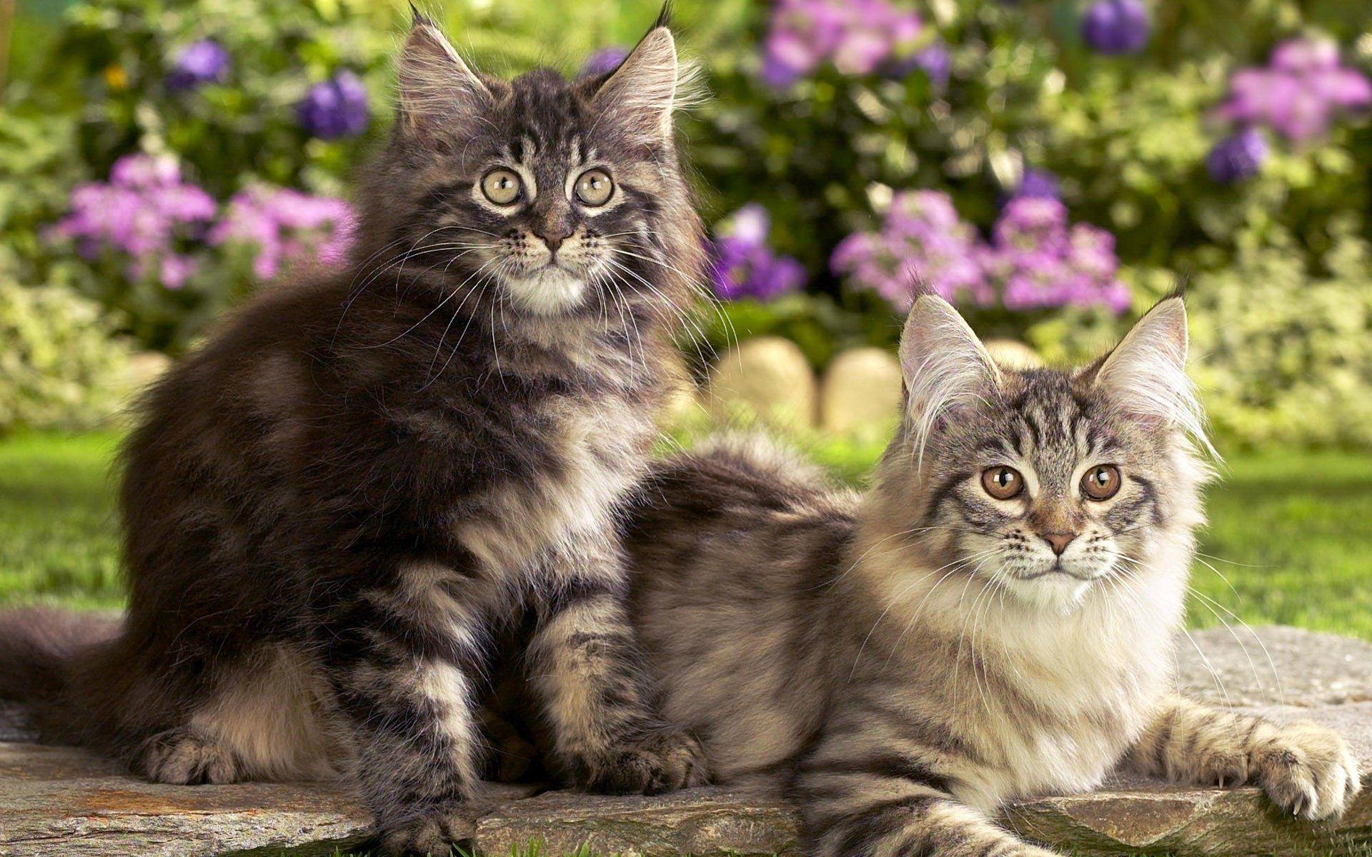 все кошки картинки фотоателье улице энтузиастов