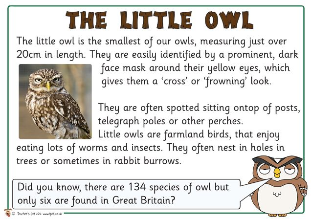 17 best images about Owl Babies on Pinterest | Pretend play ...