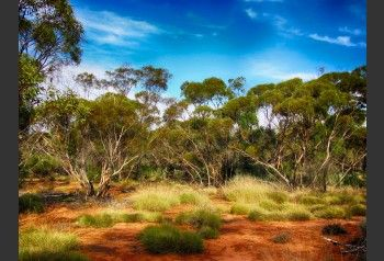 Australian Outback Wallpaper Mural Email Us Now For A Quote Sales