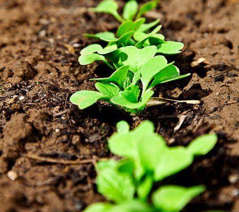 Näin perustat kasvimaan | Kodin Kuvalehti