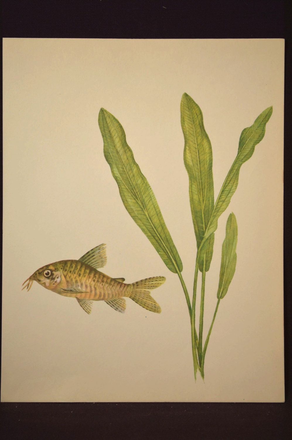 Aquarium Fish Print Tropical Fish Wall Art Decor Aquatic Plant ...