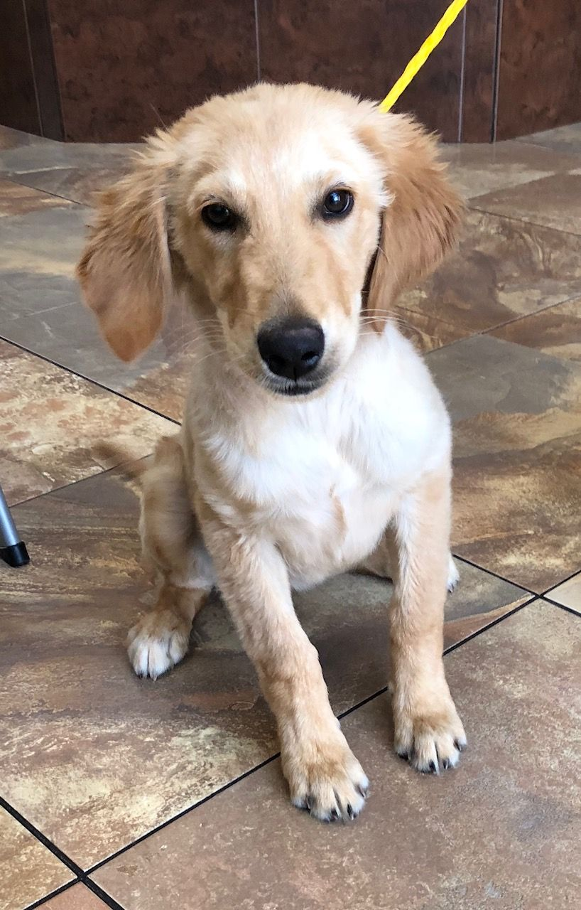 This Is Apple 4 Months Puppies Need Obedience And Socialization
