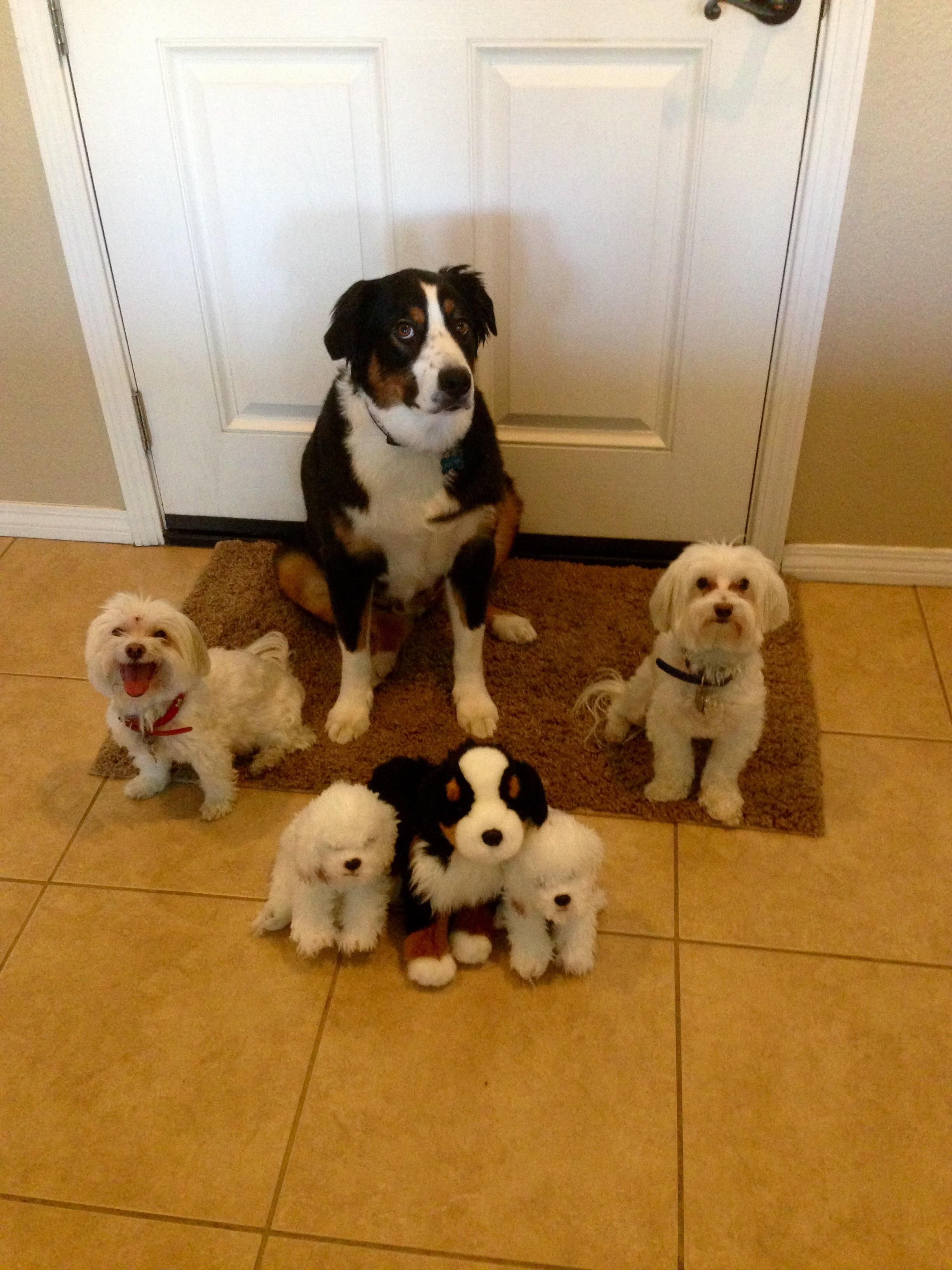 My Dogs And Their Twins Dogs Pets Dog Adopt Love Cute