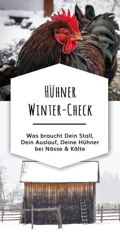 Was brauchen Hühner im Winter bei Regen Schnee und Dunkelheit Deine WinterCheckliste für Stall Auslauf Futter  Co
