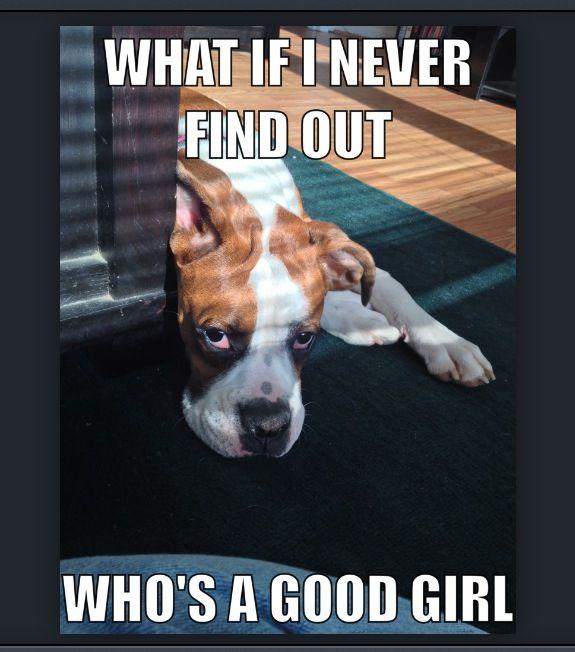 Funny Boxer Meme Boxer Dogs Funny Boxer Memes Boxer Dogs