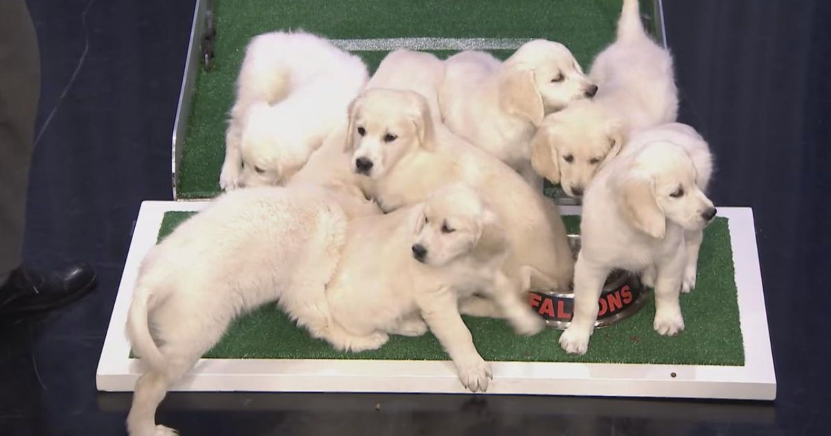 Find Out Which Team Jimmy Fallon S Puppies Think Will Win The