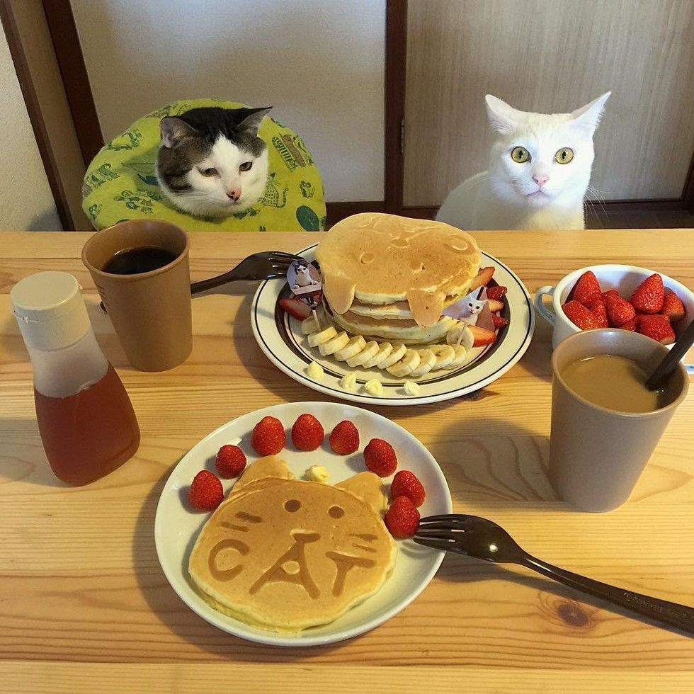 Two cats from Japan love to watch their humans eat at every meal. They inspect the dishes and critique their presentation and creativity. These two kitties of culinary expertise are not shy of meowing their opinions. The two feline buddies are partners in crime. Whenever their humans sit by the...
