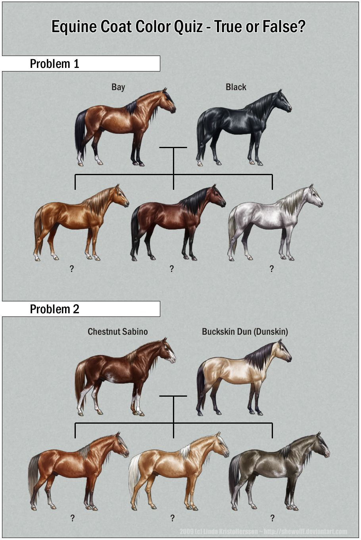 Color chart quiz also equine pinterest horse coat colors horses rh