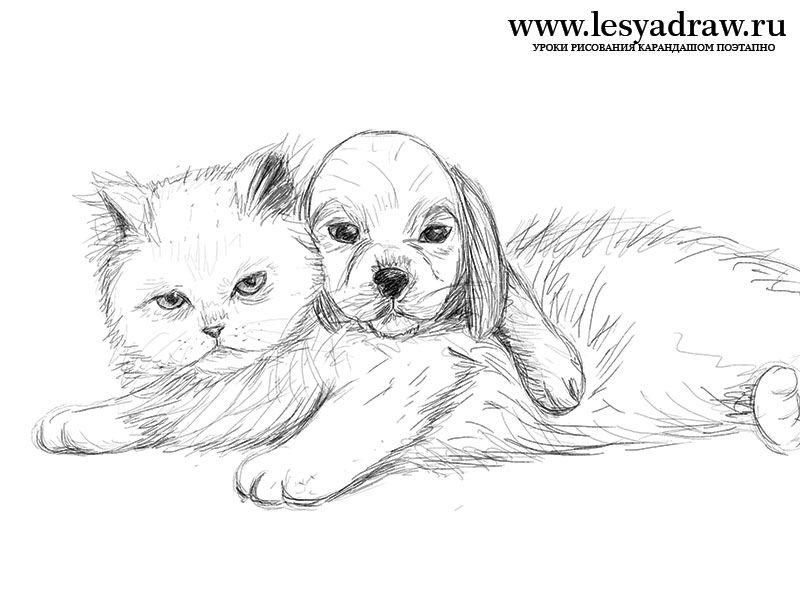 Wenn Sie Katze Mit Hund Zeichnen Lernen Mochten Dann Ist Dieses