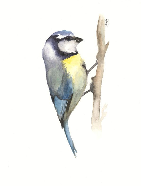 Mesange A L Aquarelle Oiseau En Aquarelle Portrait Au Crayon