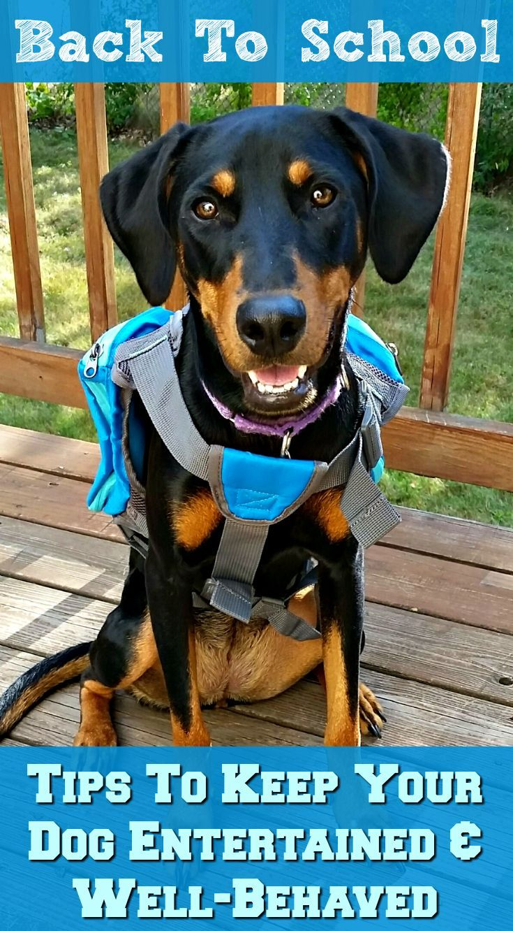 Is Your Dog Ready For Back To School Dogs Puppy Training